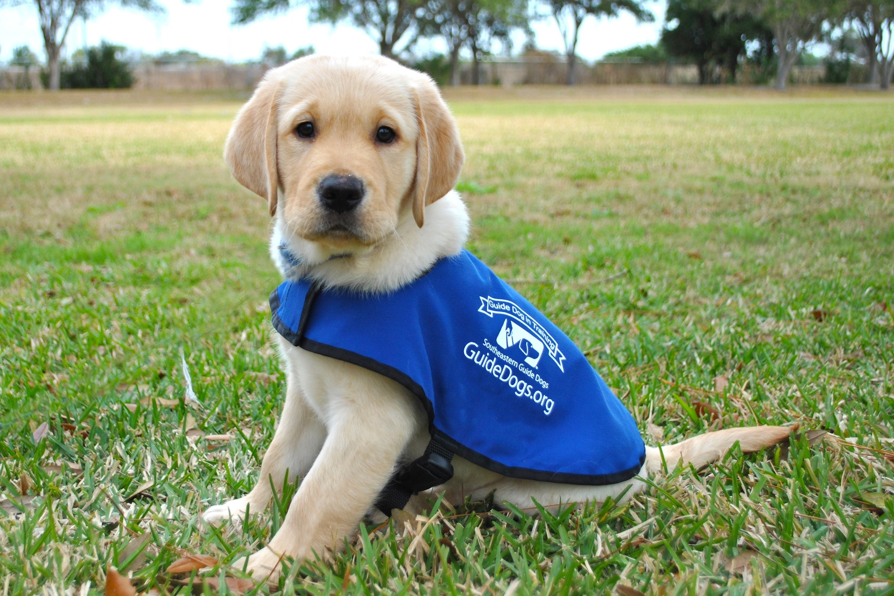 Puppies Hug Em In Florida At Southeastern Guide Dogs
