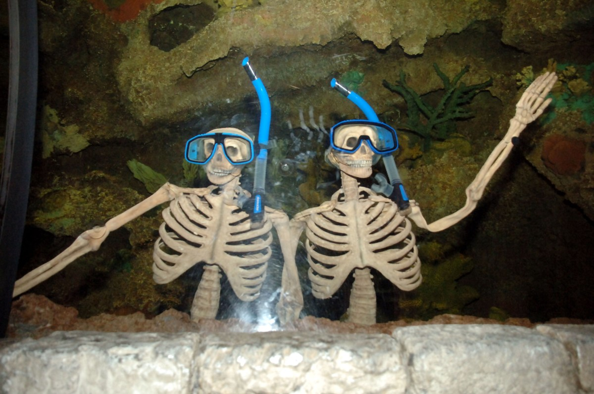 Shark Reef Aquarium - Haunted Reef - Skeletons in tank