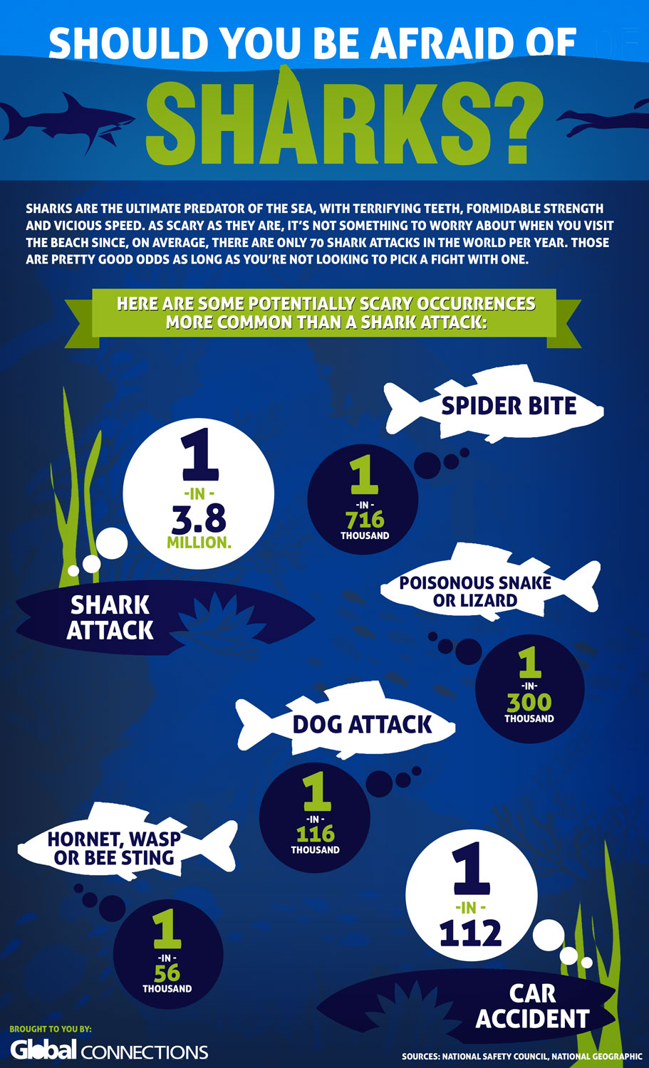 Are You Afraid Of The Shark Infographic Vacation Quest Blog