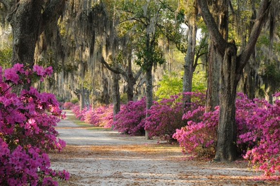 Romantic Getaway - Savannah